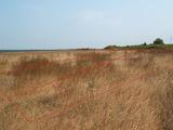 с. Близнаци, обл. Варна - продава земеделска земя, 24846кв.м,   € 82000
