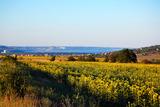 Имот за продажба с морска панорама близо до кк. Златни пясъци и кк. Албена, 6000кв.м,   € 150000